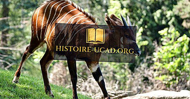 Bongo činjenice: životinje Afrike