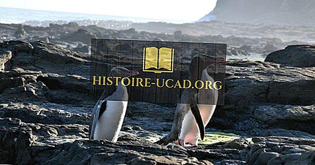 Lista zagrożonych gatunków pingwinów