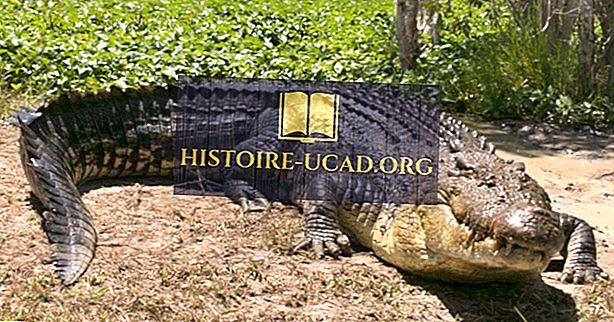 Milline oli suurim krokodill, mida kunagi salvestati?