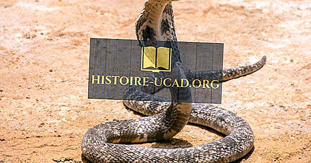 ¿Dónde viven las cobras reales?
