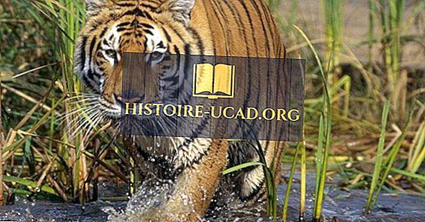 Kde je národní park Sundarbans?
