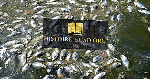 Wat veroorzaakt vis doodt?