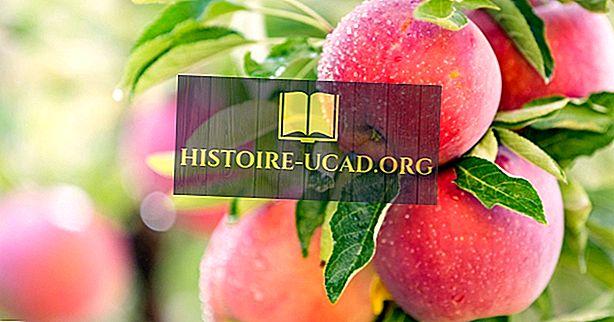 من أين تأتي التفاح من الأصل؟