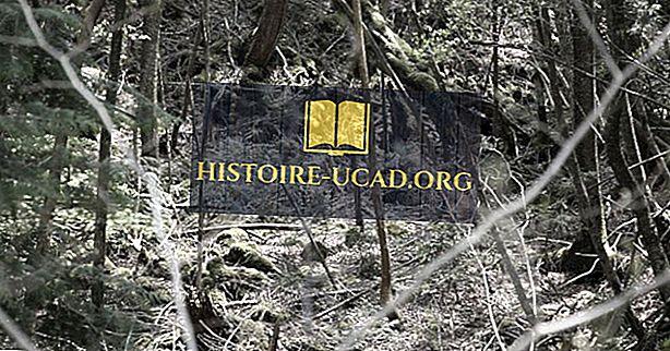 Você sabia que a misteriosa floresta Aokigahara também é conhecida como a floresta do suicídio?