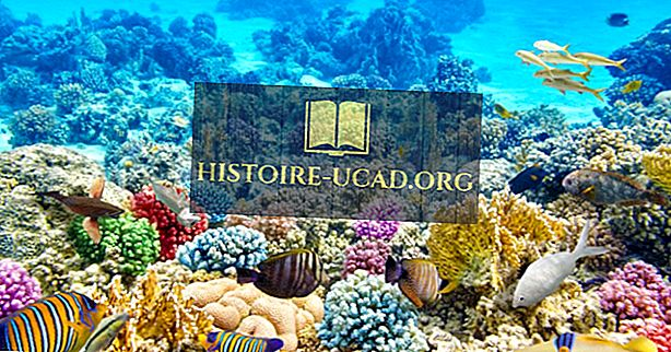 Mitu liiki korallriffe on olemas?
