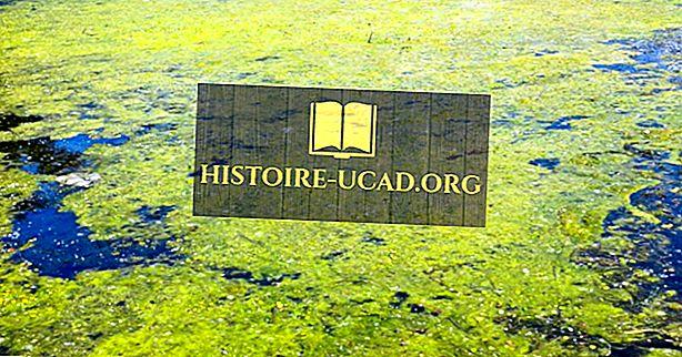 Koja je ekološka važnost algi?
