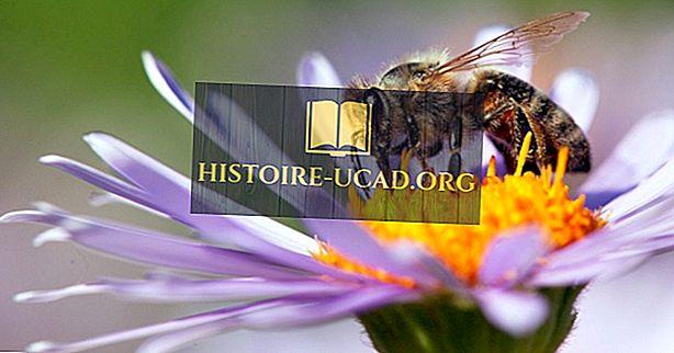 Зашто су нам пчеле важне?