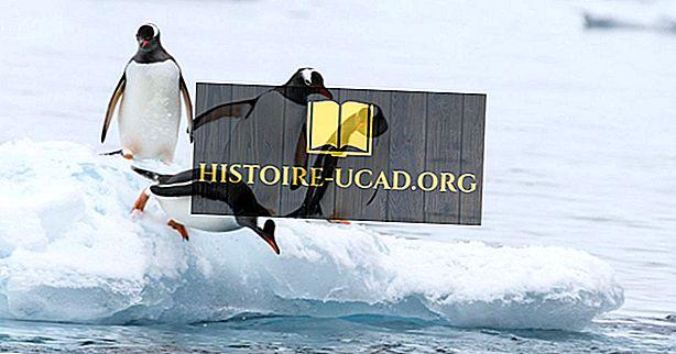 Najlepšie miesta na svete vidieť tučniaky v divočine