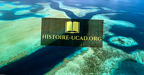 ما هي النسبة المئوية لمنطقة المحيط في العالم المحمية؟