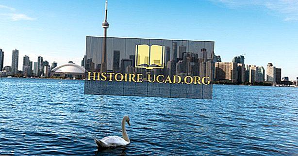 Jaké jsou primární přítoky a odtoky jezera Ontario?