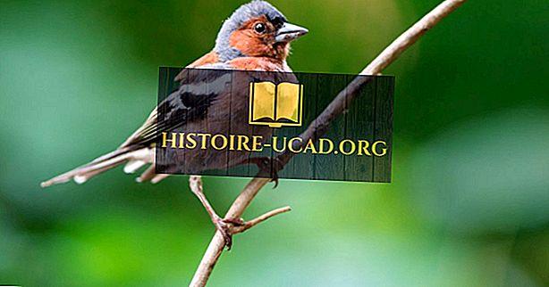Mit jelentenek a Passerine madarak?