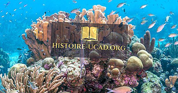 Kaj je ohranitveni status svetovnih koral za gradnjo grebenov?