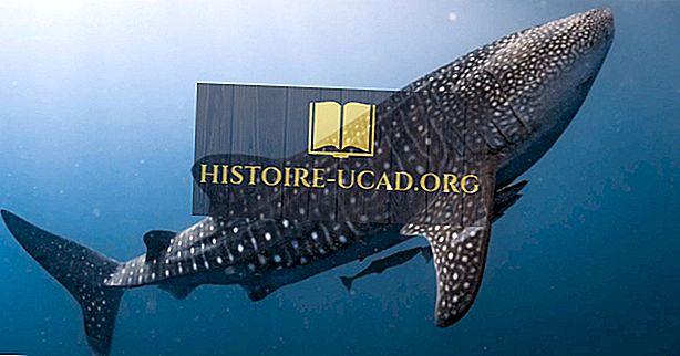 Valaiden hain tosiasiat: valtamerien eläimet