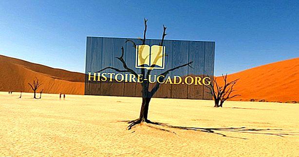 Къде ли се намира пустинята Калахари?