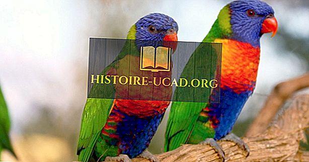 De meest kleurrijke vogels uit de hele wereld