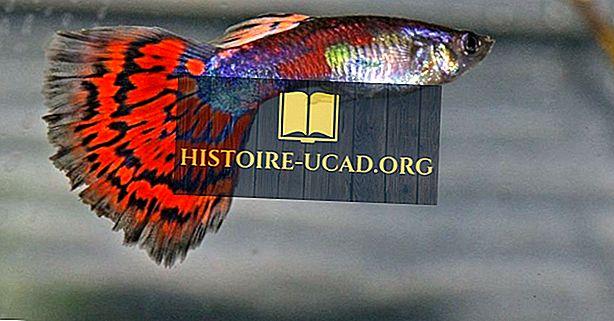 Native Fish Of Venezuela