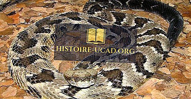 Списък на отровни и не-отровни змии от Алабама
