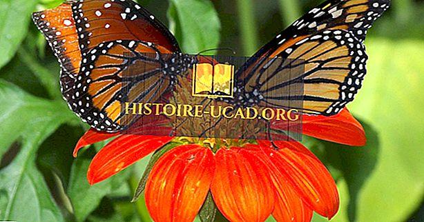 As maiores borboletas do mundo