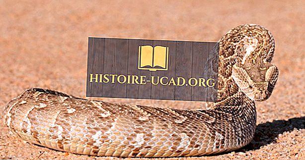 Dodelijke slangen gevonden in Afrika
