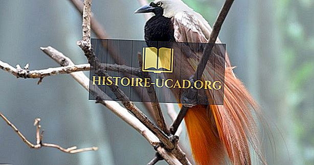Las fascinantes aves de Nueva Guinea