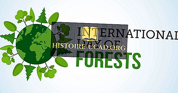 Kdy a proč je oslavován Mezinárodní den lesů?