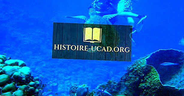 Резерват за бариерен риф Белиз - застрашен обект от световното наследство на ЮНЕСКО