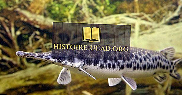 Rodzime Ryby Stanów Zjednoczonych Ameryki