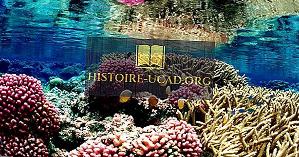 الشعاب المرجانية - الموقع ، وتشكيل ، وأهمية