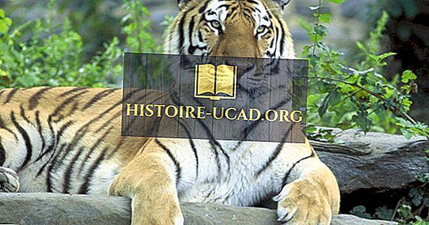 Země s největším počtem divokých tygrů
