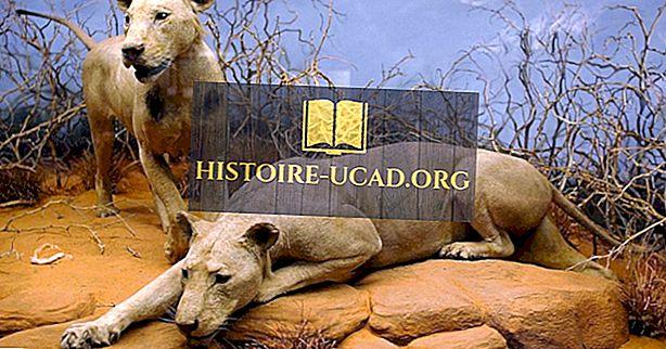 Les lions les plus meurtriers qui mangent l'homme dans l'histoire