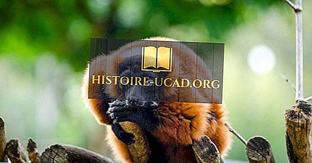 الحيوانات المستوطنة في مدغشقر