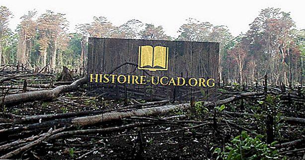 Wylesianie wywołane produkcją węgla drzewnego na całym świecie