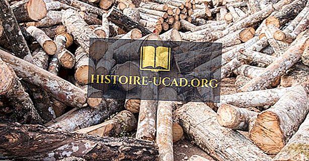 Países exportadores de los mayores volúmenes de troncos tropicales