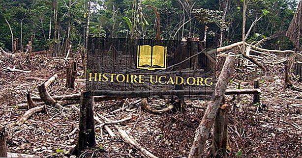 Værste lande til skovrydning ved skovområde tab