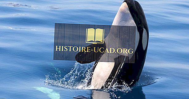 okolje - Dejstva o kitolovu: Živali Severne Amerike