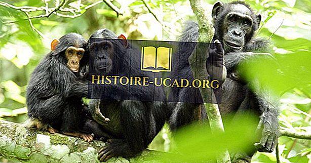 Ekologiczne regiony Ugandy