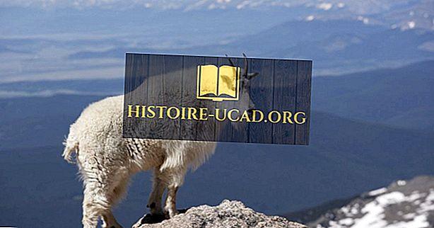 okolje - Mountain Lion Facts: Živali Severne Amerike