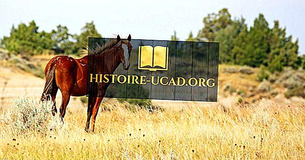 środowisko - Mustang Facts: Zwierzęta Ameryki Północnej