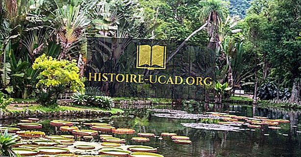 ブラジルの生息地と生態系