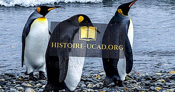 Kaiserpinguin Fakten: Tiere der Antarktis