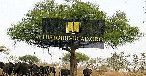 المناطق البيئية في الكاميرون