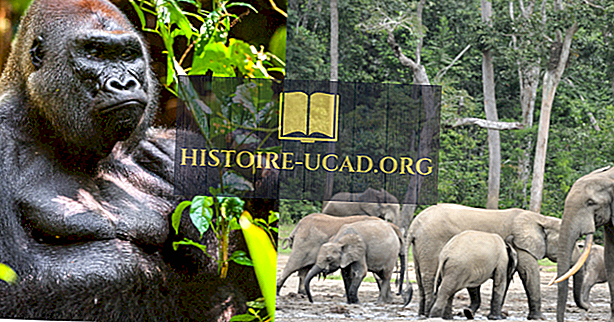 Kesk-Aafrika Vabariigi ökoloogilised piirkonnad