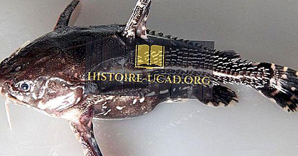 Poisson Indigène De Colombie