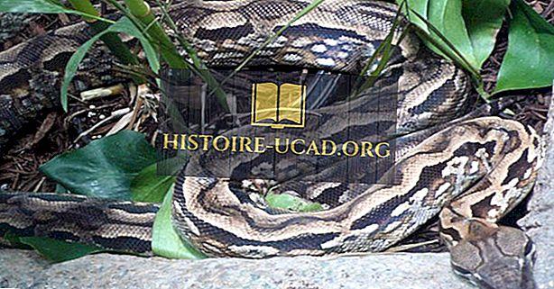 Madagaskaras rāpuļi