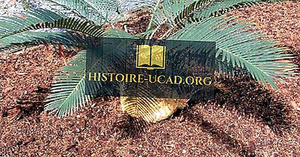 النباتات الأصلية المهددة في بابوا غينيا الجديدة