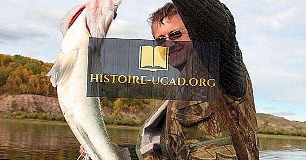Native Fish -lajit Venäjältä