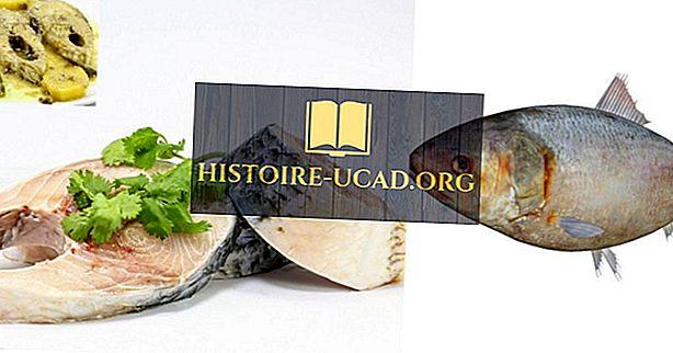 Ryby Saúdské Arábie
