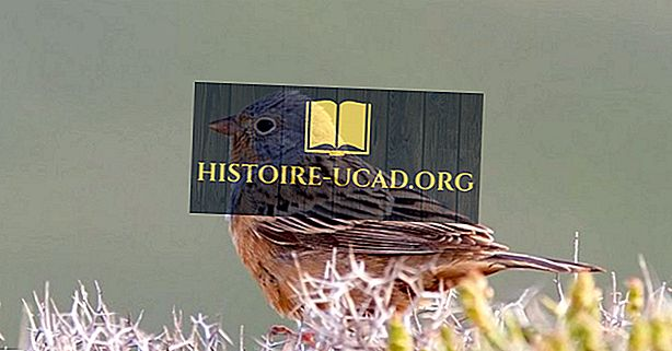 Çad'ın Yerli Kuşları