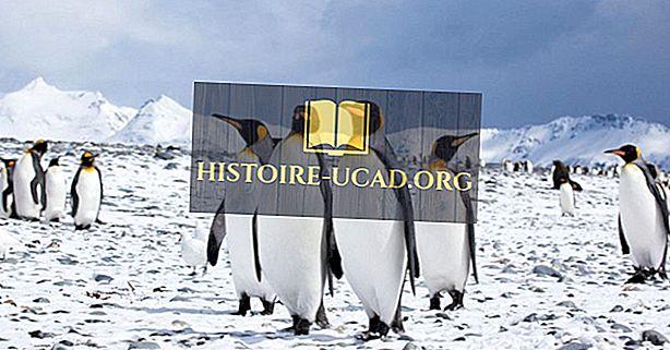 Az Antarktisz pingvinek