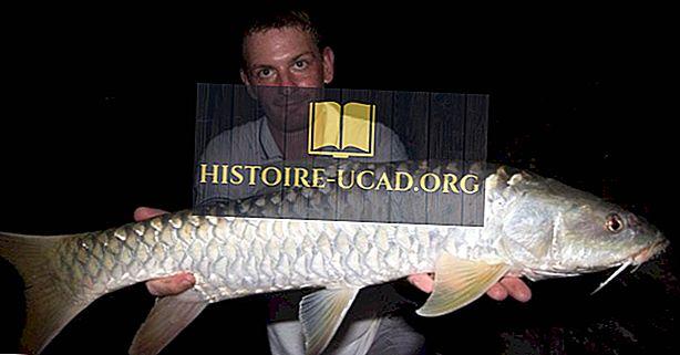 Pakistānas vietējās zivju sugas